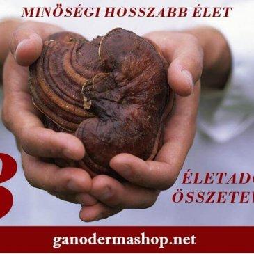 Miért hosszabbítja meg az életet a Ganoderma? 3 Öregedésgátló ganoderma összetevő