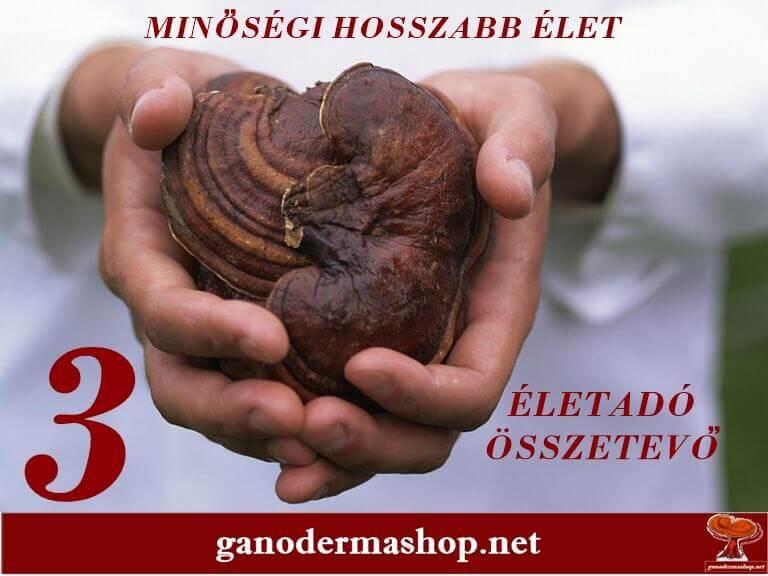 LINGZI GANODERMA 3 ELETADO OSSZETEVO GANODERMASHOP.NET